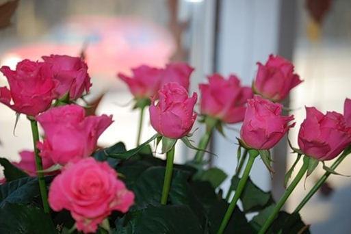 Сорта роз - роза Sving (Свинг)