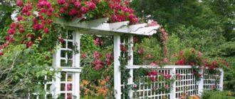 перголы для роз