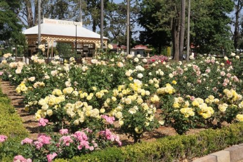 Как выбрать место для посадки роз