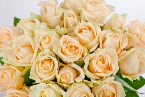 Сорта роз — роза Peach Avalance (Пич Аваланж)